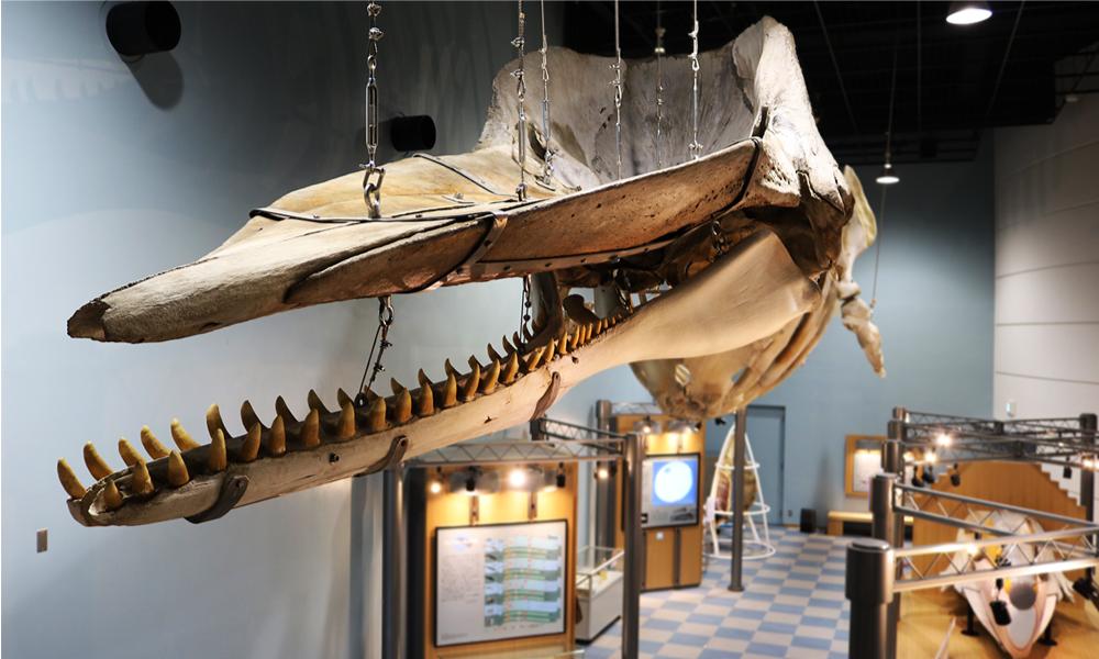 鯨の不思議と海の神秘