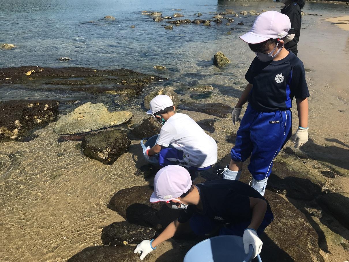 海の生き物学習